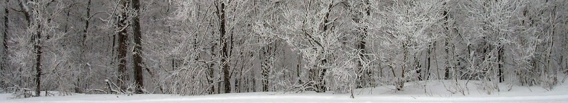 Snow covered trees and ground
