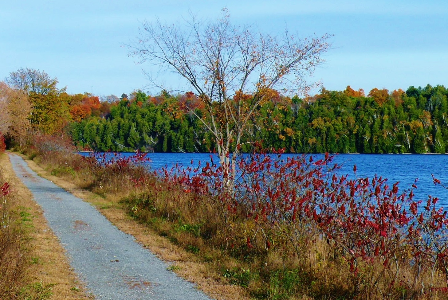 Pond on the Cataraqui trail in the autumn