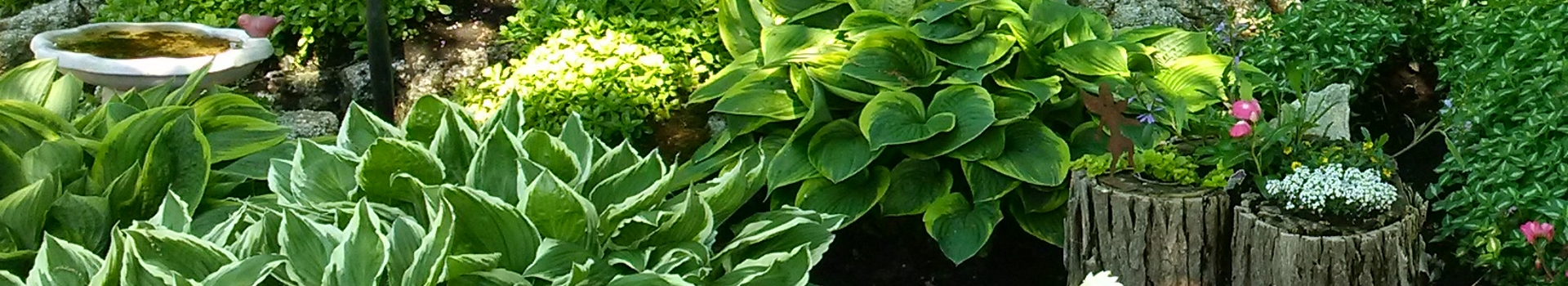 A photo of a garden with hostas and a bird bath.